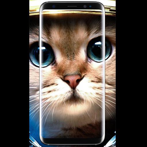 Cat Wallpaper Hd Posted By John Johnson