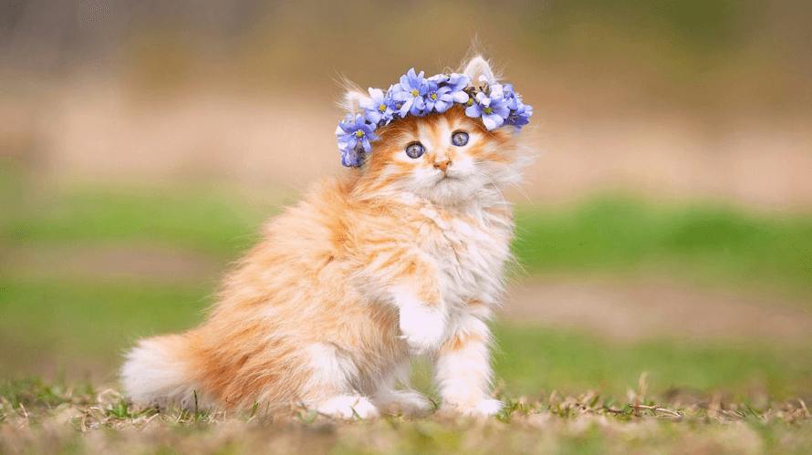 Cat Wallpapers Free Download Posted By John Johnson