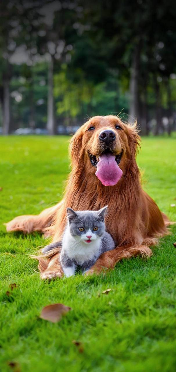 Cats And Dog Wallpapers Posted By John Walker