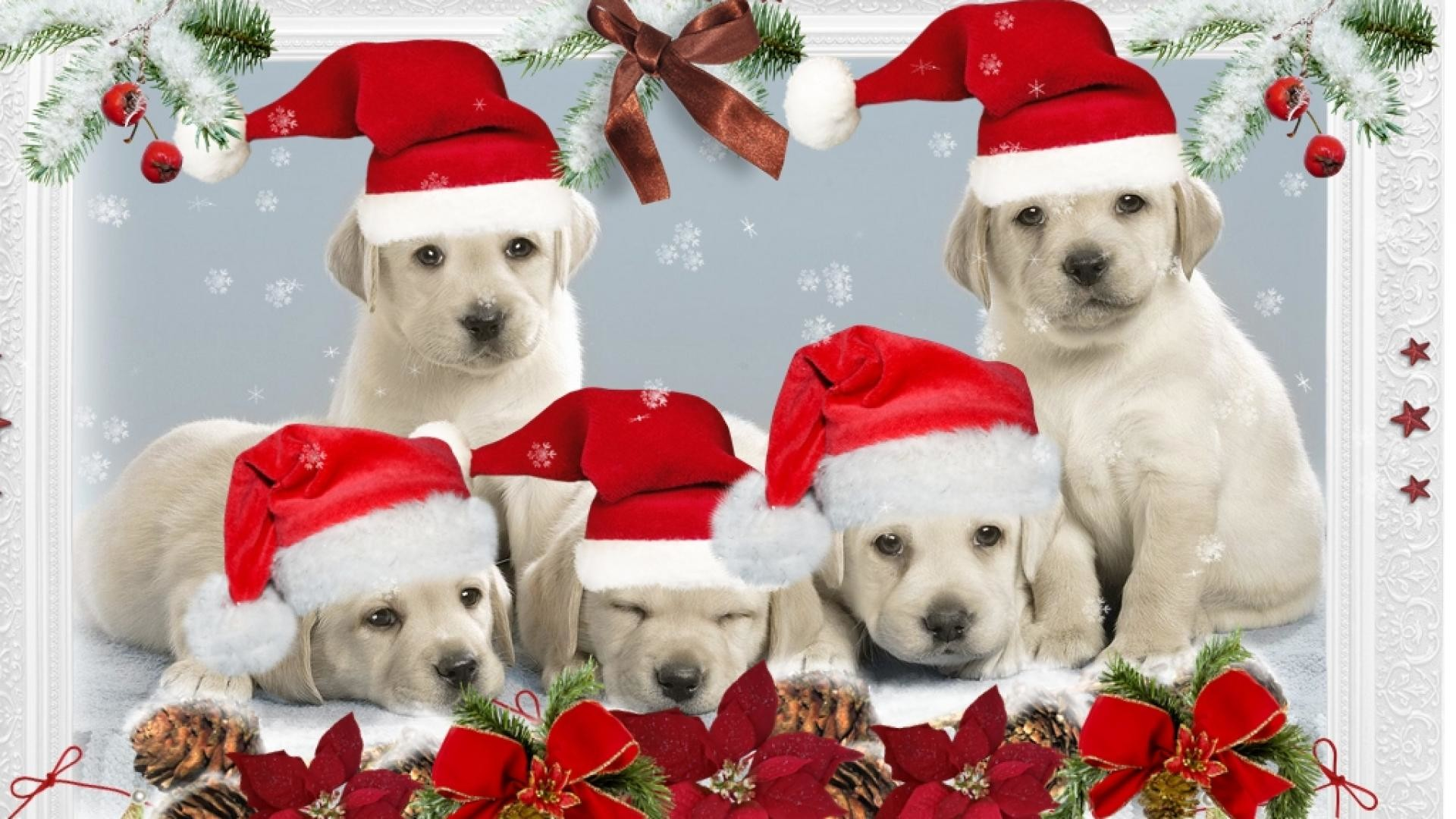 Puppy Christmas Wallpaper 60+ images