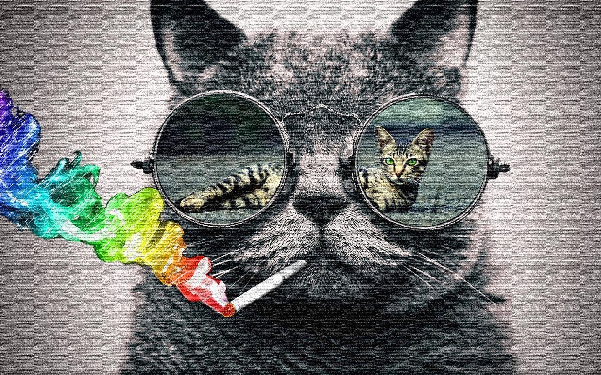 Cool Cat Wallpapers Hd Posted By Christopher Sellers