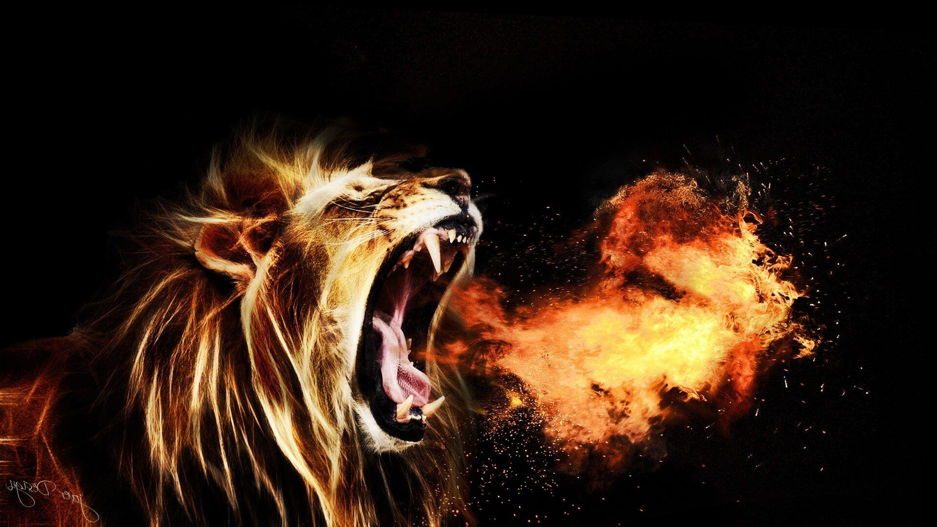 Cool Lion Backgrounds Posted By Ryan Anderson