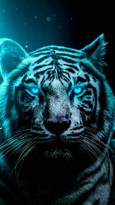 Cool Tiger Wallpapers Posted By Ryan Anderson