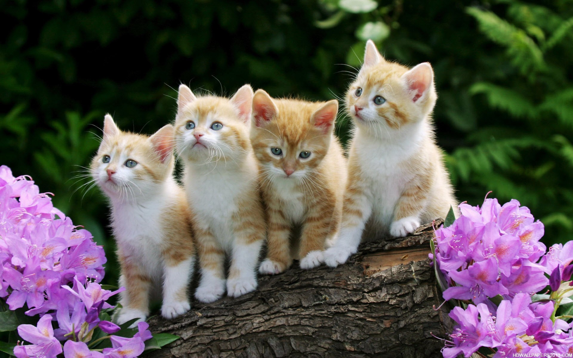 Cute Animal Wallpapers For Desktop Background Full Screen Posted By Samantha Johnson