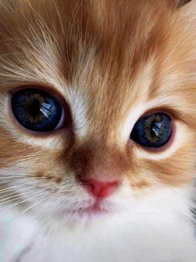 Funny Cute Kittens Memes