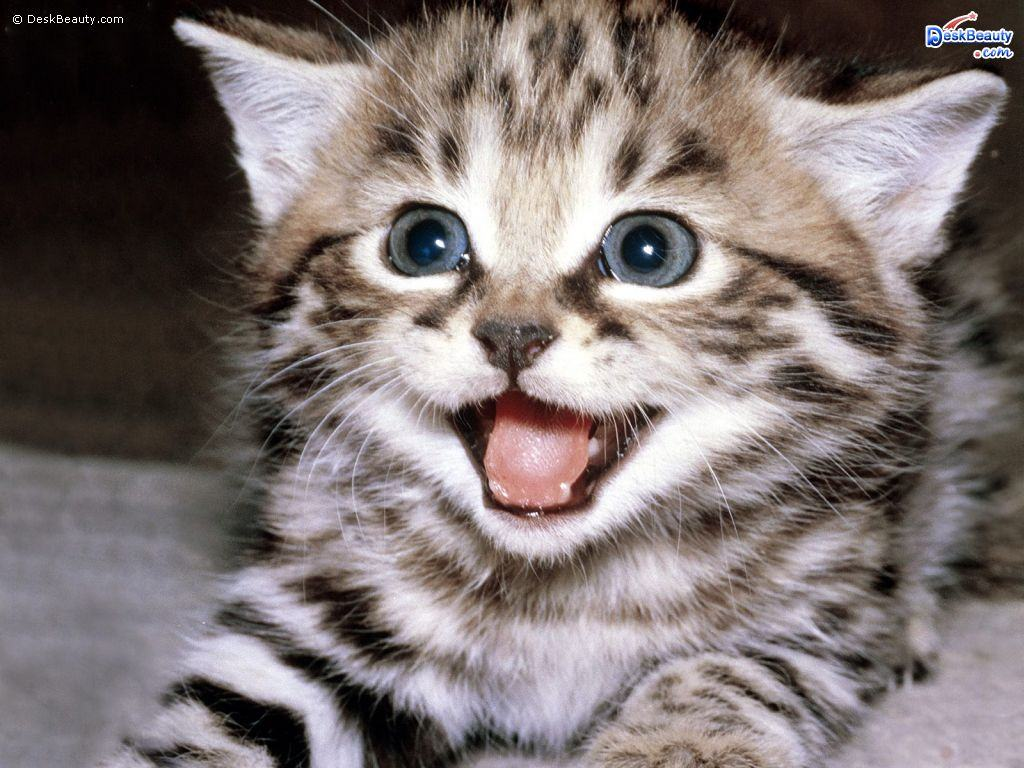 Cute Baby Animals Wallpapers Posted By Christopher Peltier