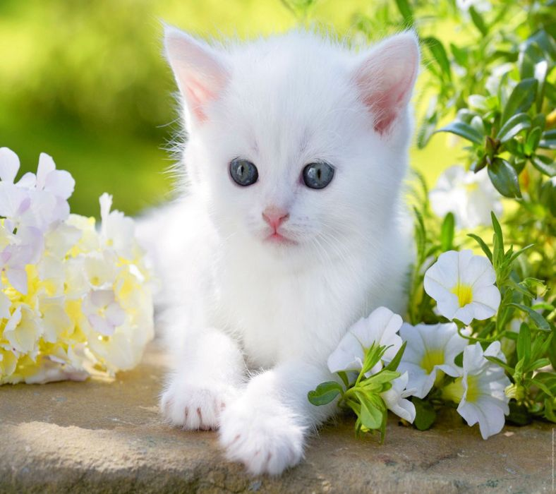 Cute Baby Cat Images Posted By Sarah Cunningham