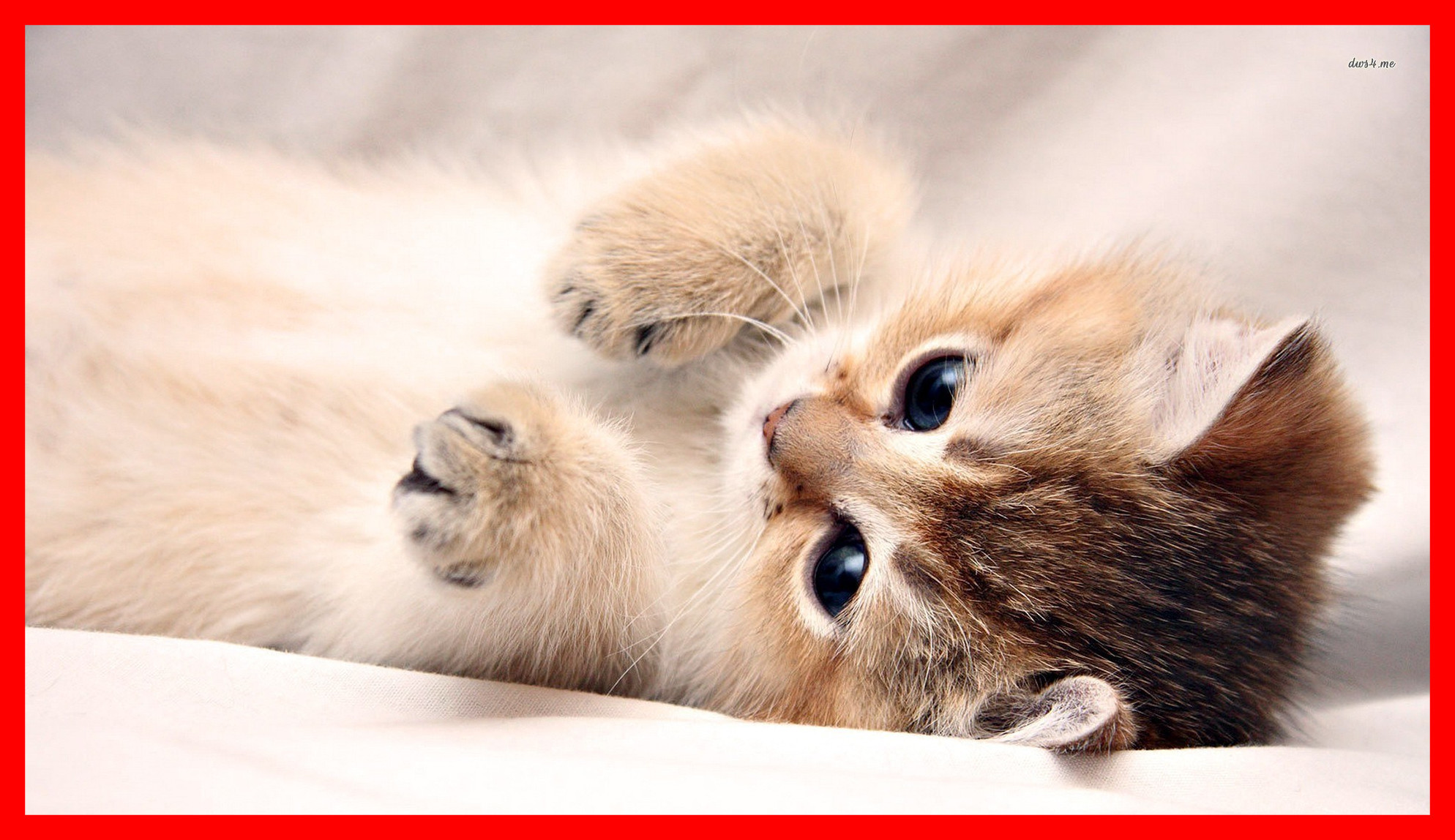 Cute Baby Cats Pictures Posted By Ryan Thompson