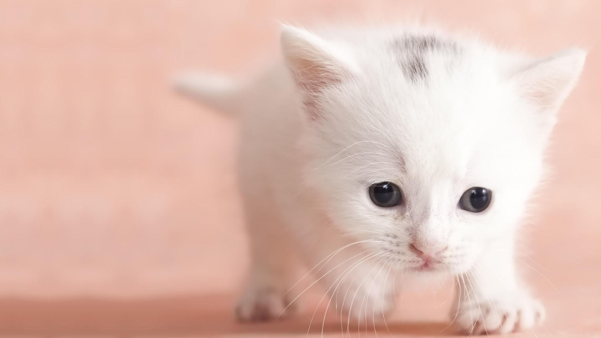 Cute Baby Cats Wallpaper Posted By John Mercado