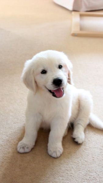 Cute Baby Dogs Wallpapers Posted By Michelle Walker