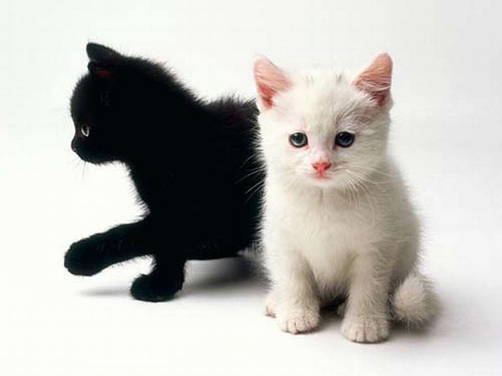 Cute Black And White Kittens Wallpaper Posted By Zoey Johnson