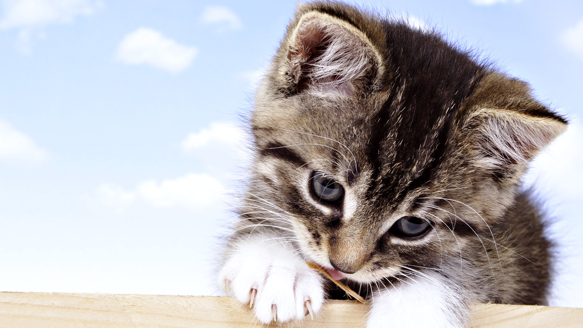 Cute Cat Wallpapers For Desktop 30 images on Genchi.info