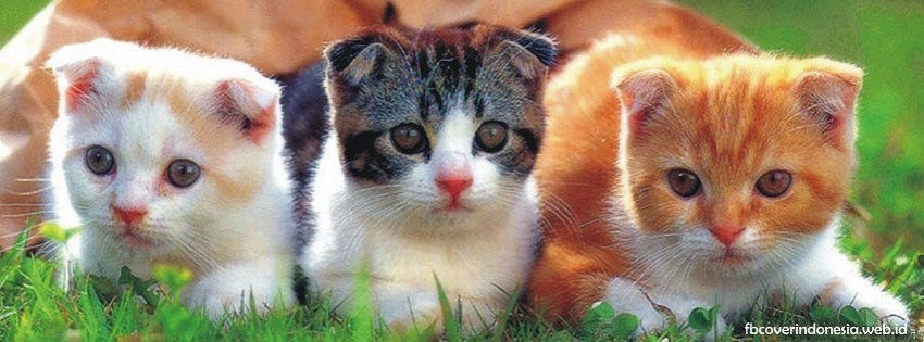 Cute Cat Profile Pictures Posted By John Peltier