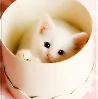 Cute Cat Wallpaper As Dp Posted By Michelle Johnson