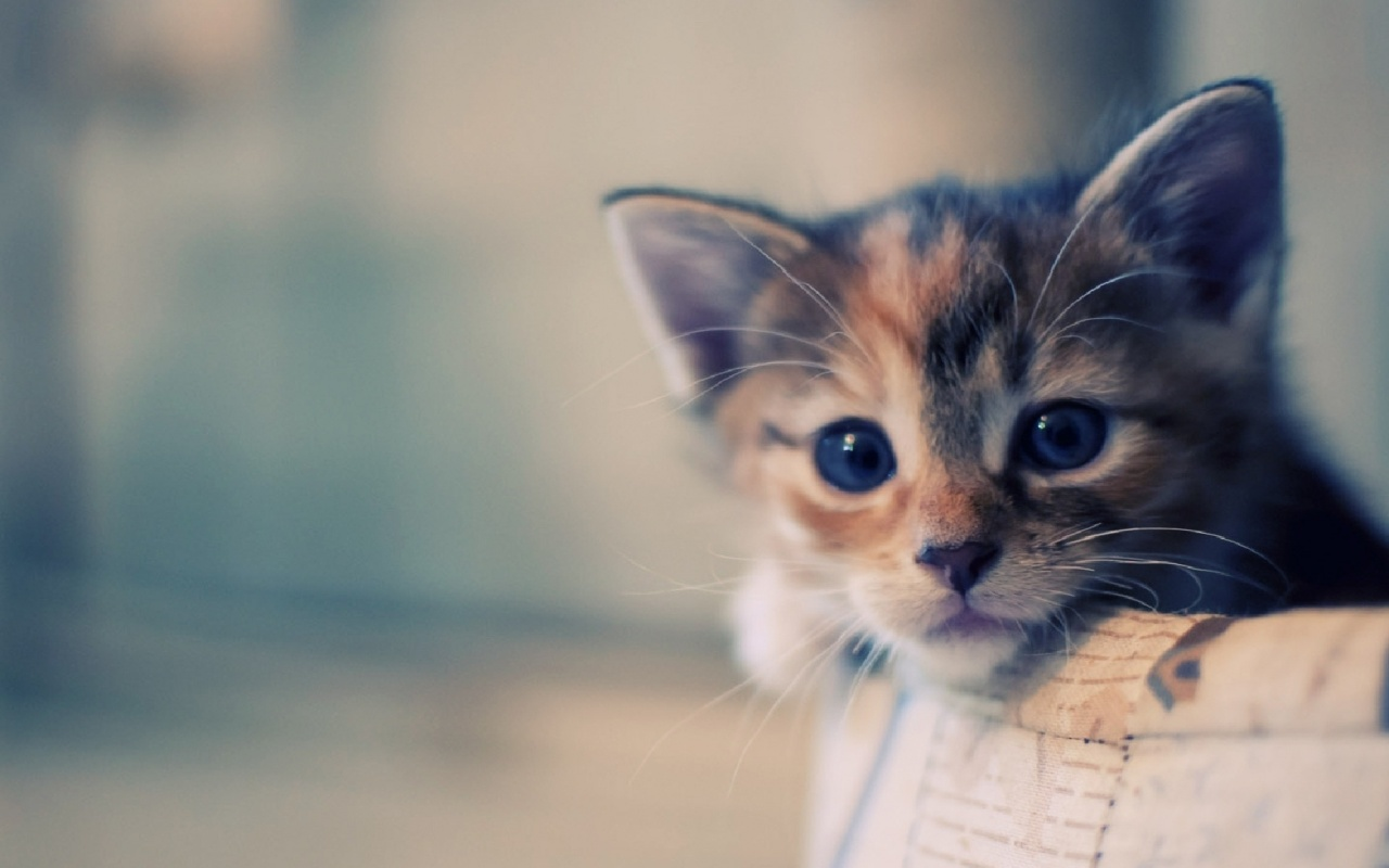 Cute Cat Wallpaper Desktop Posted By Ryan Cunningham