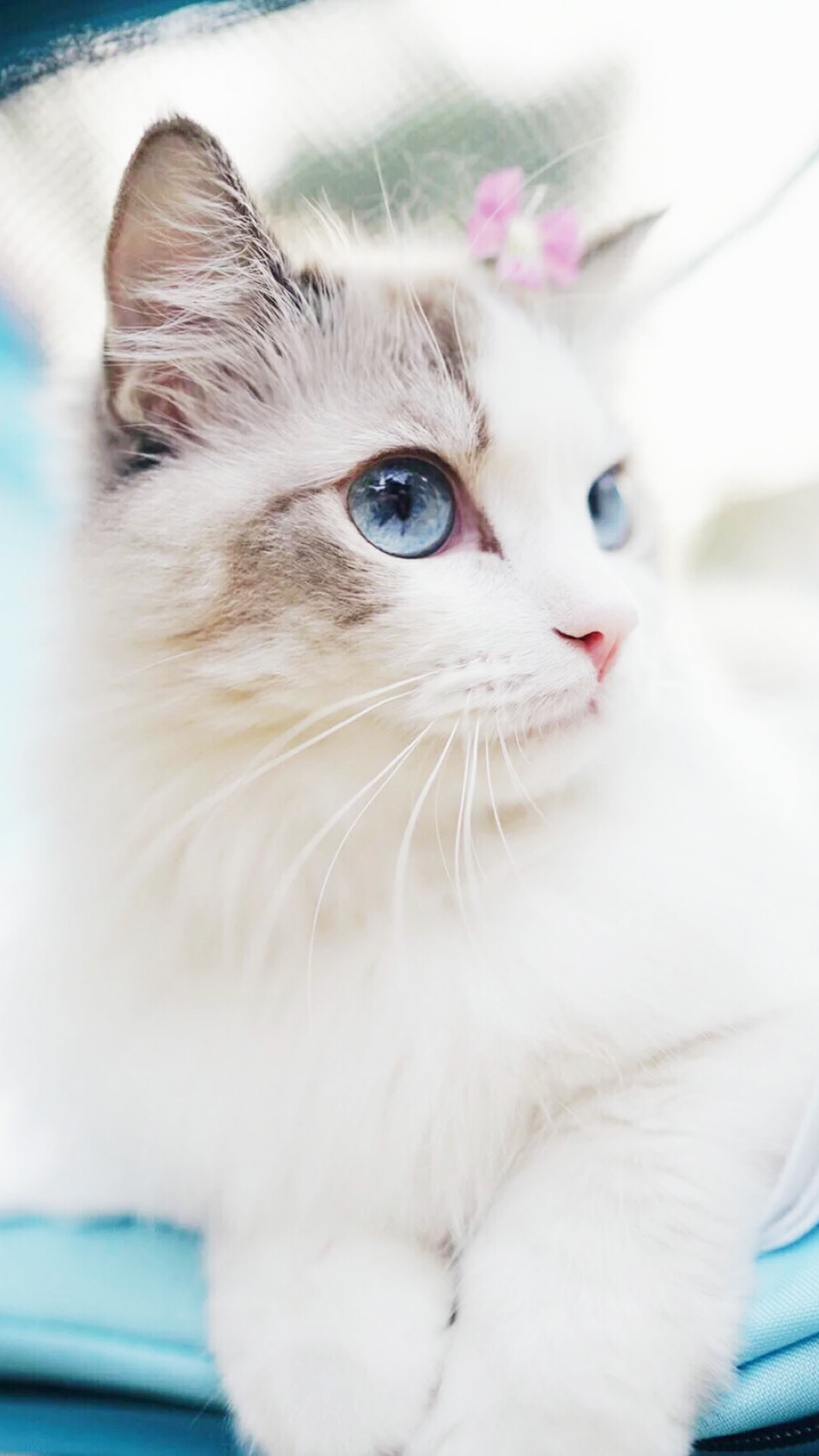 Cute Cat Wallpaper Posted By Ethan Cunningham