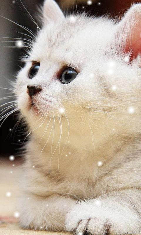 Cute Cat Wallpapers Posted By Zoey Anderson