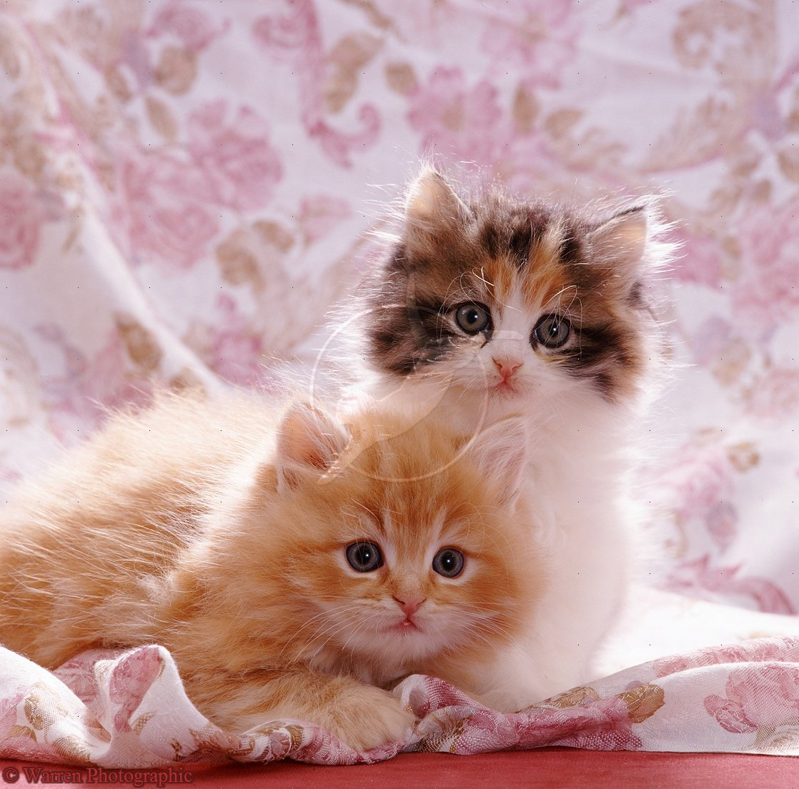 Cute Dog And Cat Wallpaper Posted By Sarah Cunningham
