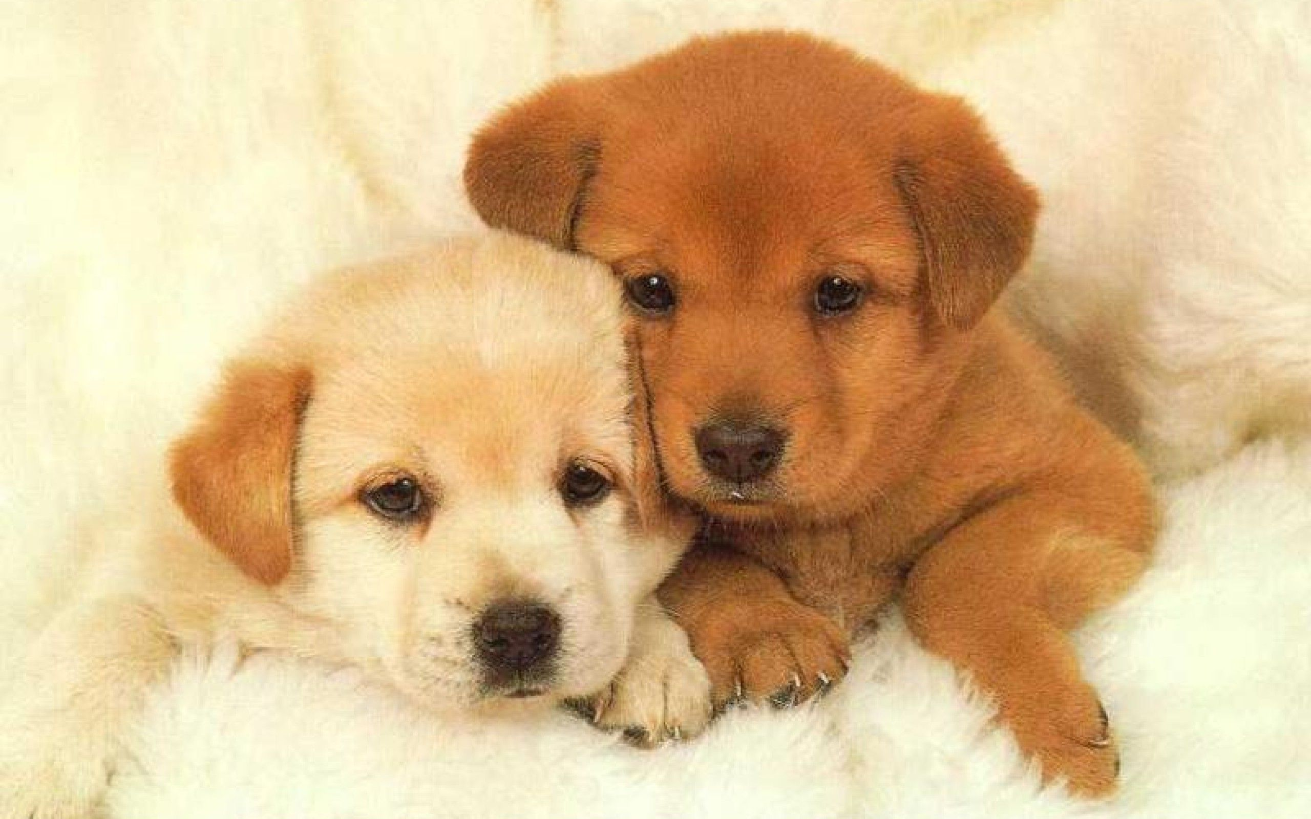 Cute Dogs And Puppies Wallpaper Posted By Zoey Johnson