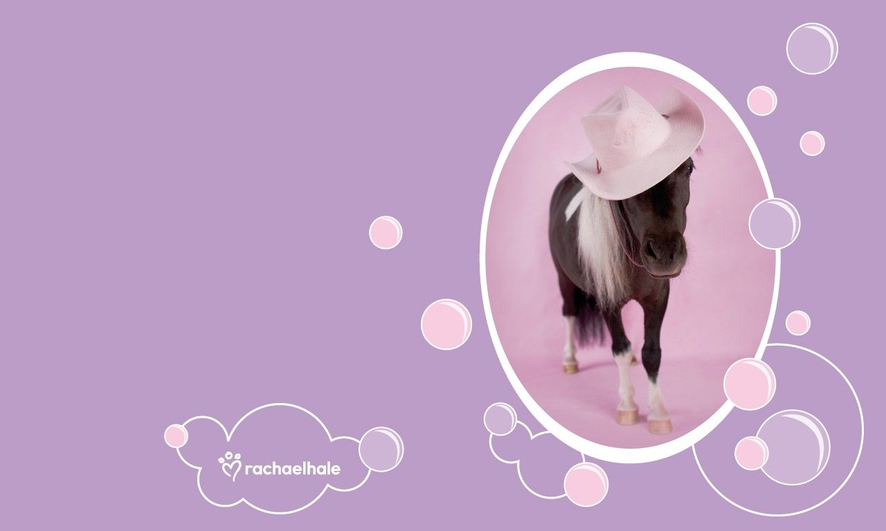 Cute Horse Wallpapers Posted By Ryan Johnson Images, Photos, Reviews