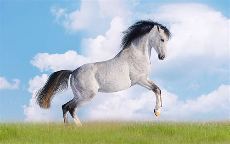 Cute Horse Wallpapers Posted By Ryan Johnson