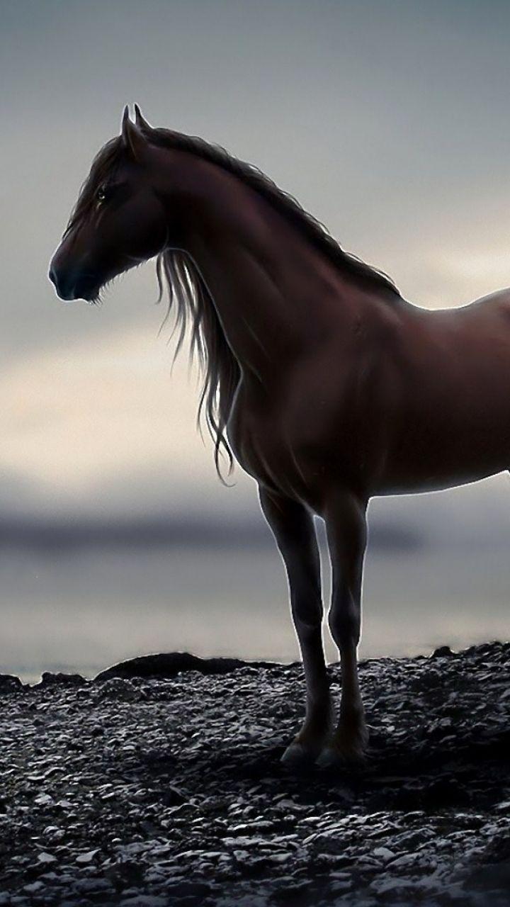 Cute Horses Wallpaper Posted By John Mercado