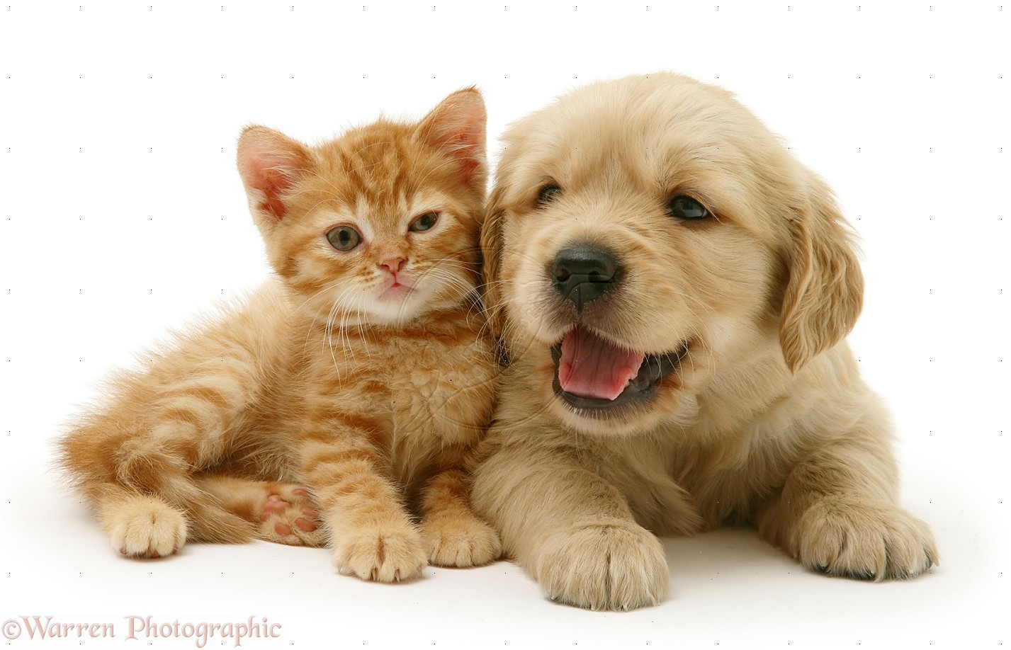 Cute Kittens And Puppies Posted By Sarah Peltier