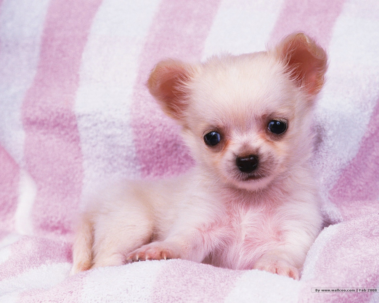 Cute Puppies Wallpaper Hd Posted By Michelle Anderson