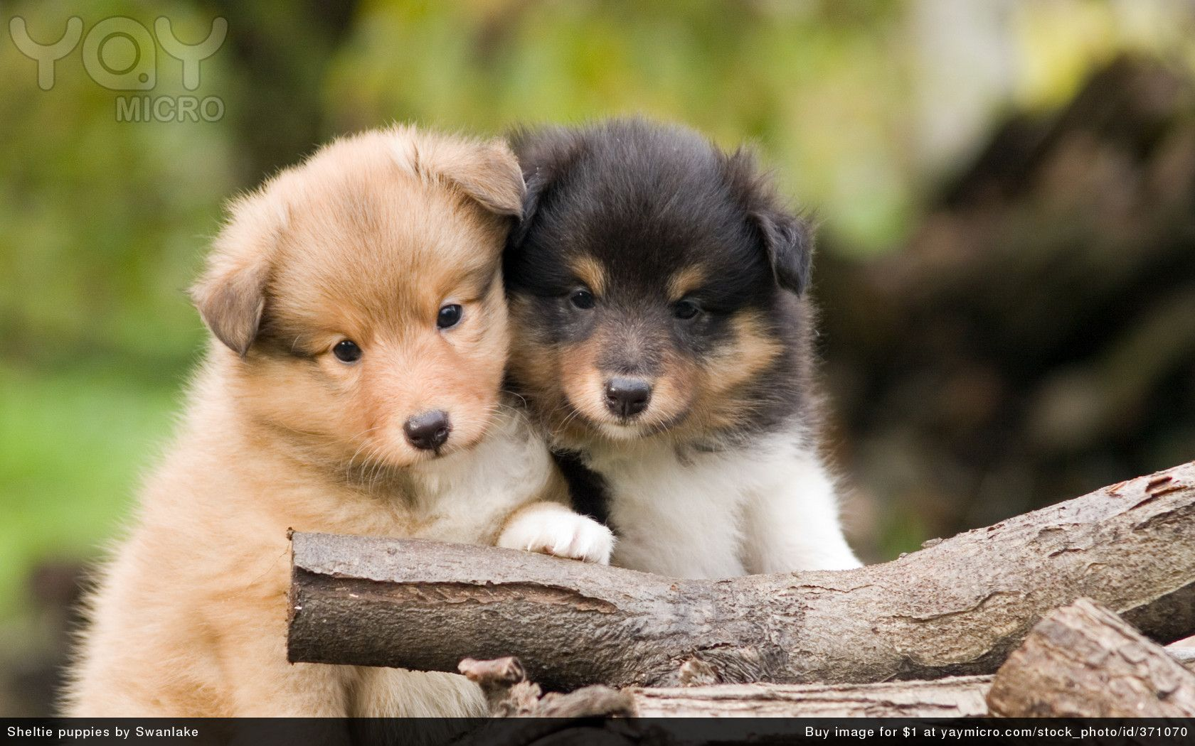 Cute Puppies Wallpapers For Computer Posted By Michelle Anderson