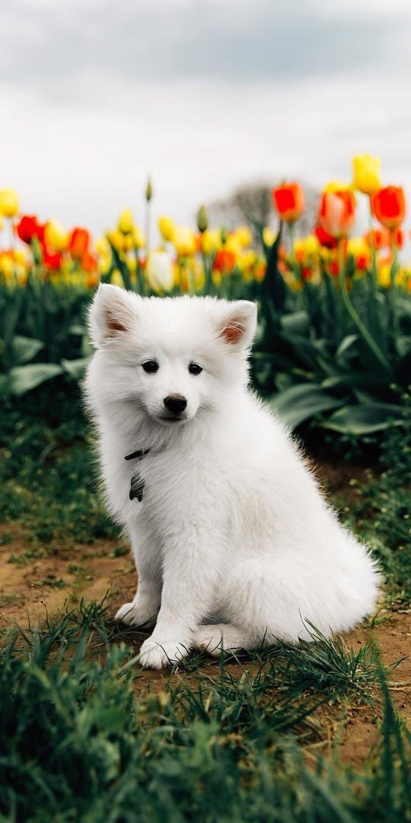 Cute Puppy Backgrounds Posted By John Anderson