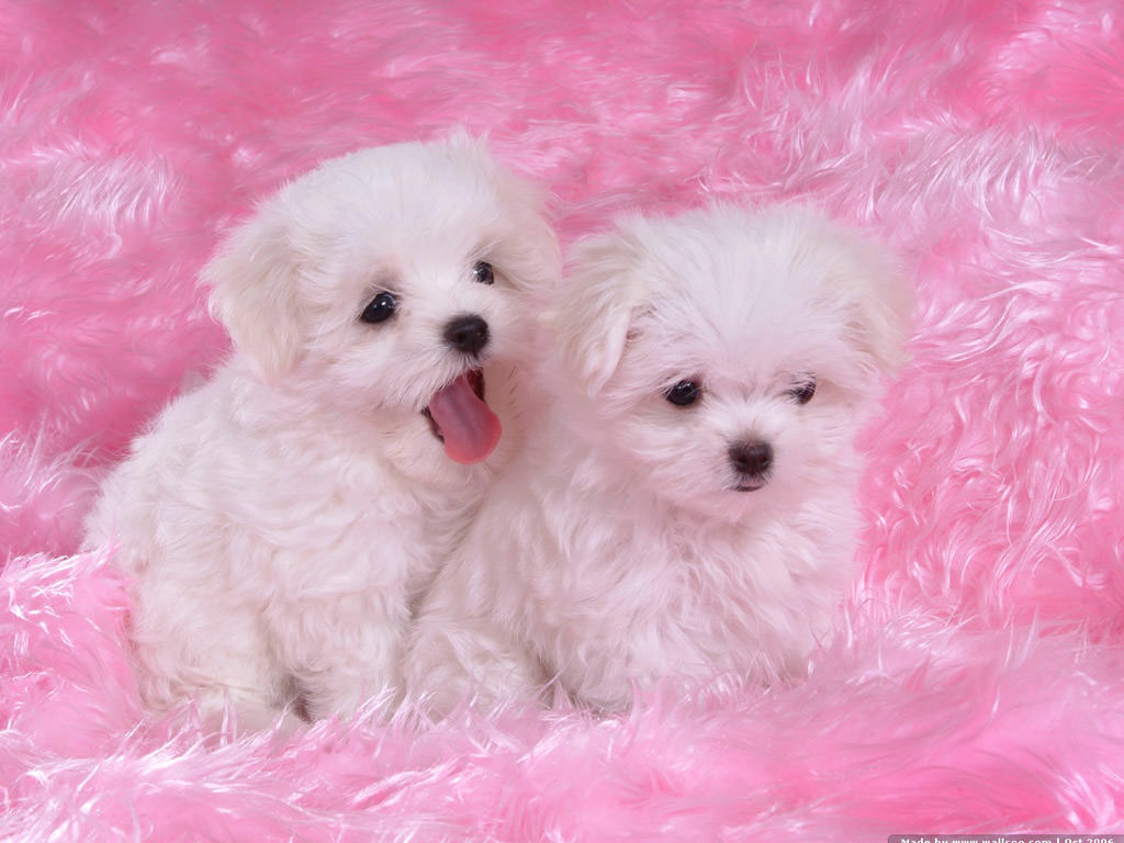 Cute Puppy Screensavers Posted By Ethan Anderson