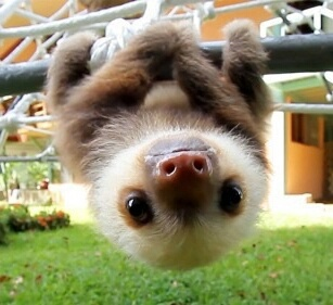 Cute Sloth Wallpaper Posted By Ethan Simpson