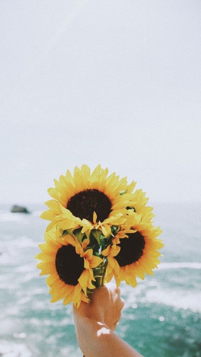 Cute Sunflower Wallpaper Posted By Ethan Thompson