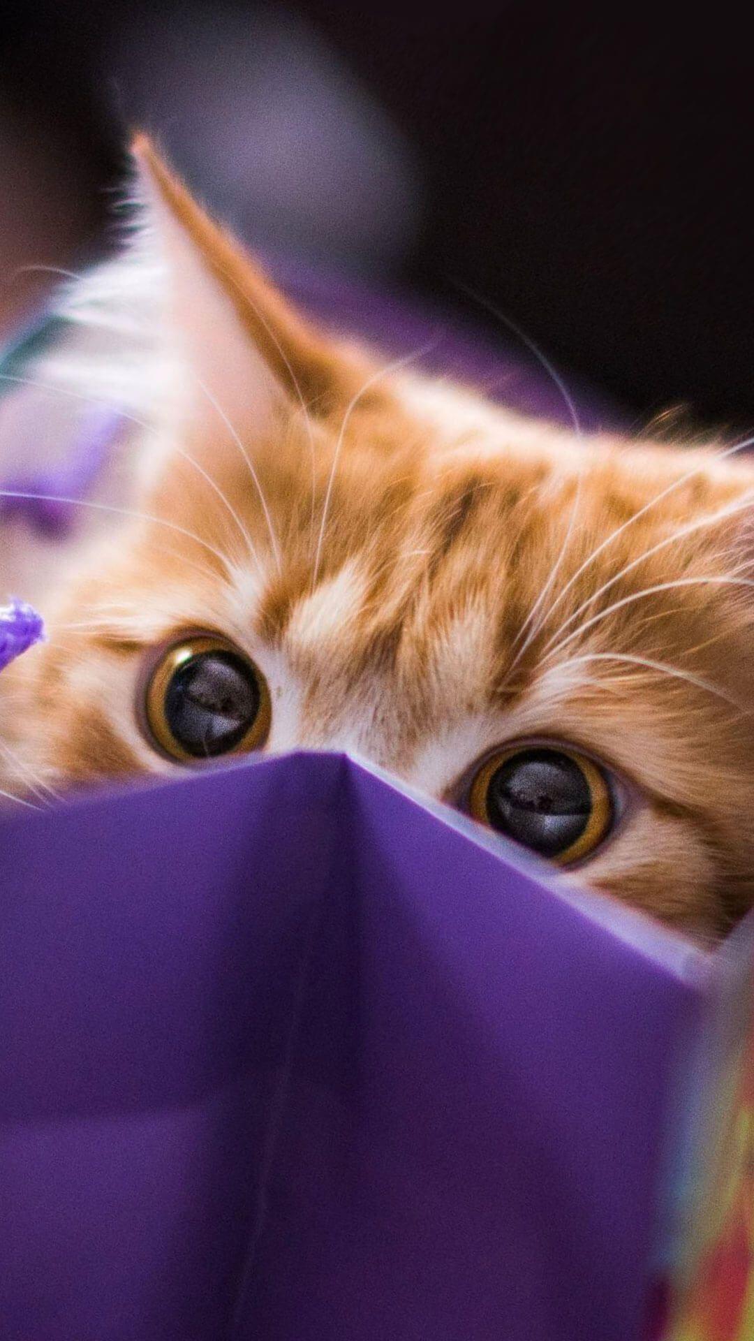 Cat Wallpaper Aesthetic Gambar Ngetrend Dan Viral