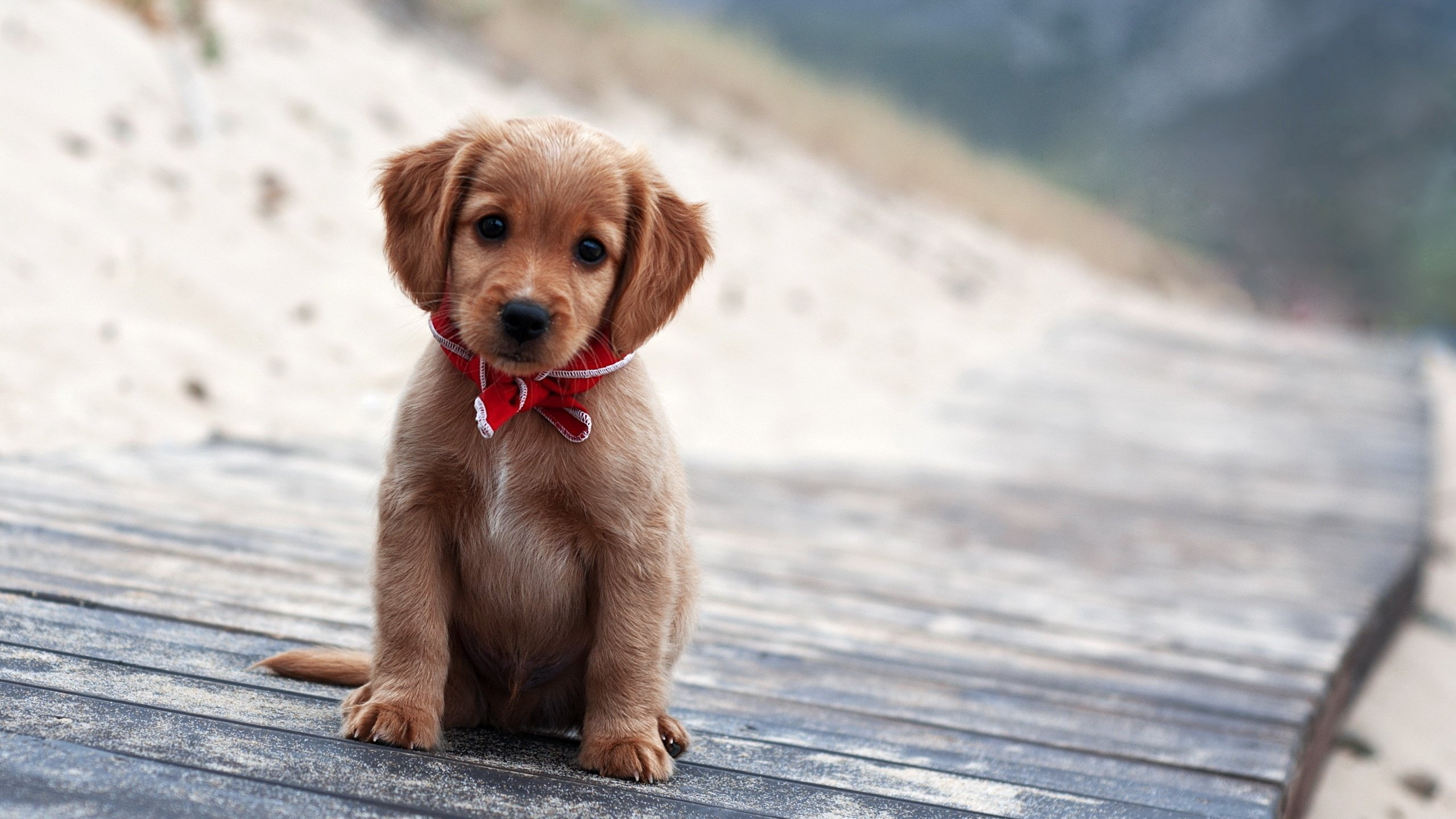 Cute Wallpapers Puppies Posted By Christopher Anderson