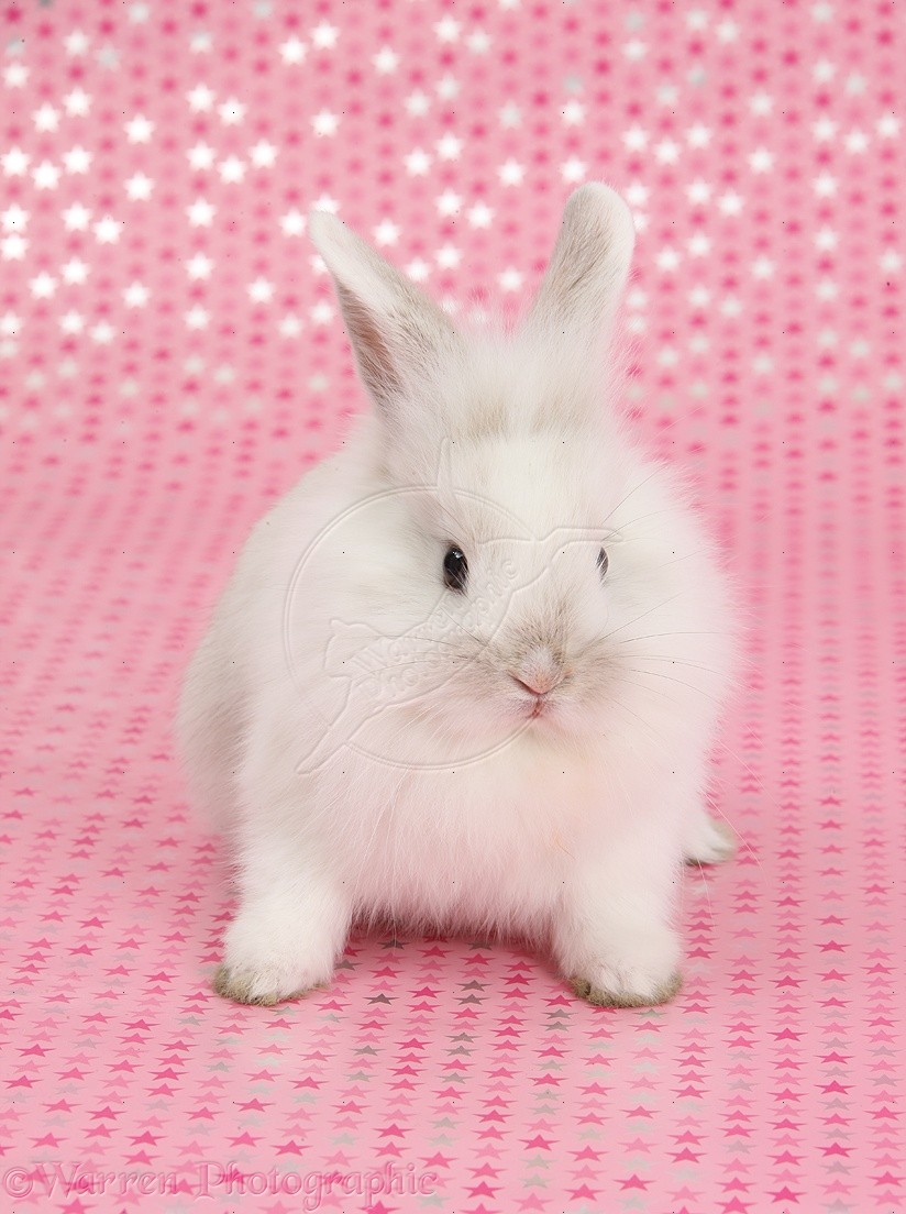 Cute White Baby Rabbit Wallpaper Posted By Ethan Sellers