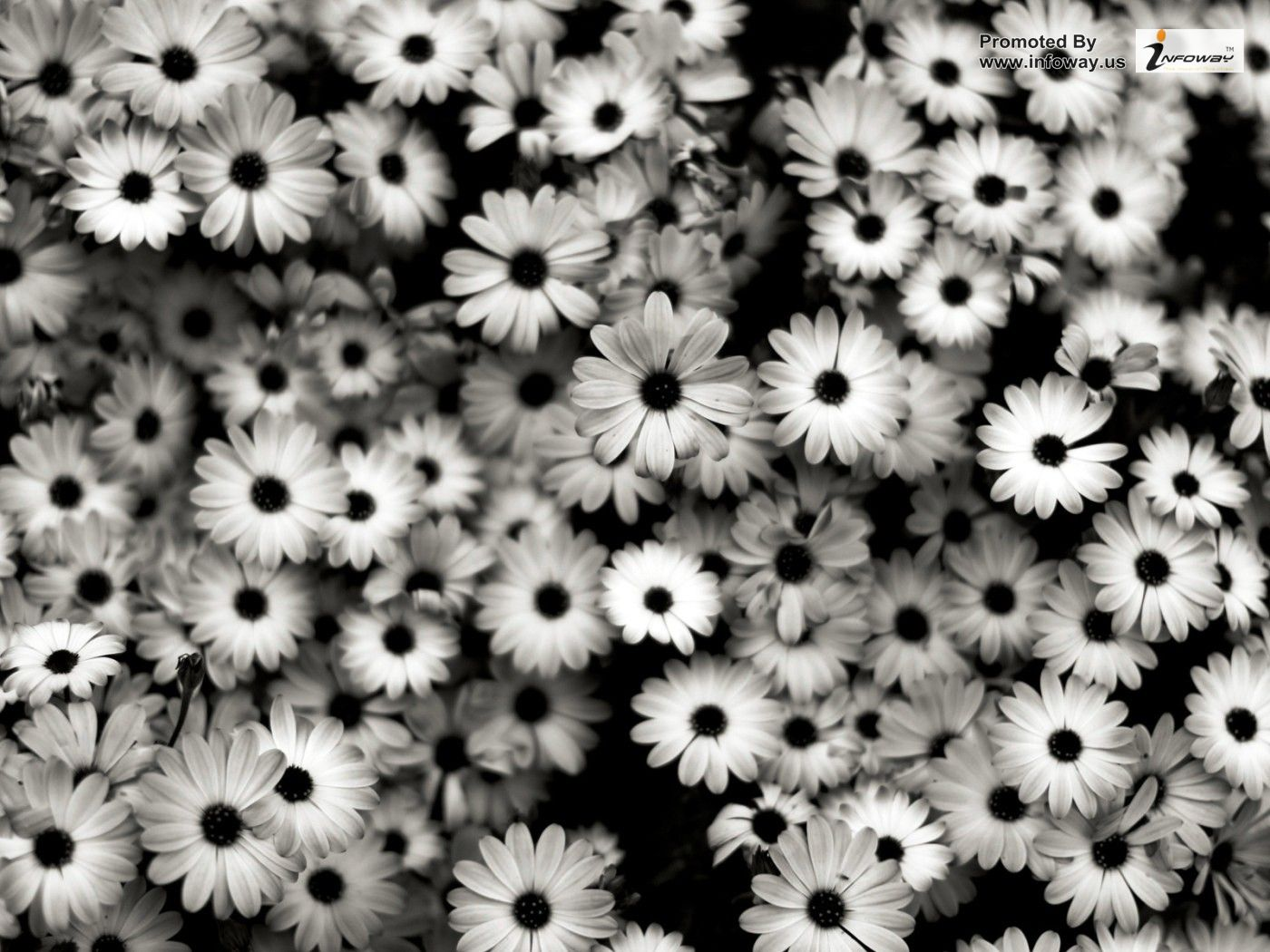 Daisy Background Tumblr Posted By Michelle Simpson