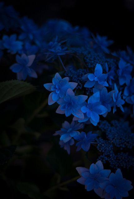 Untitled Blue aesthetic Blue art Dark blue flowers