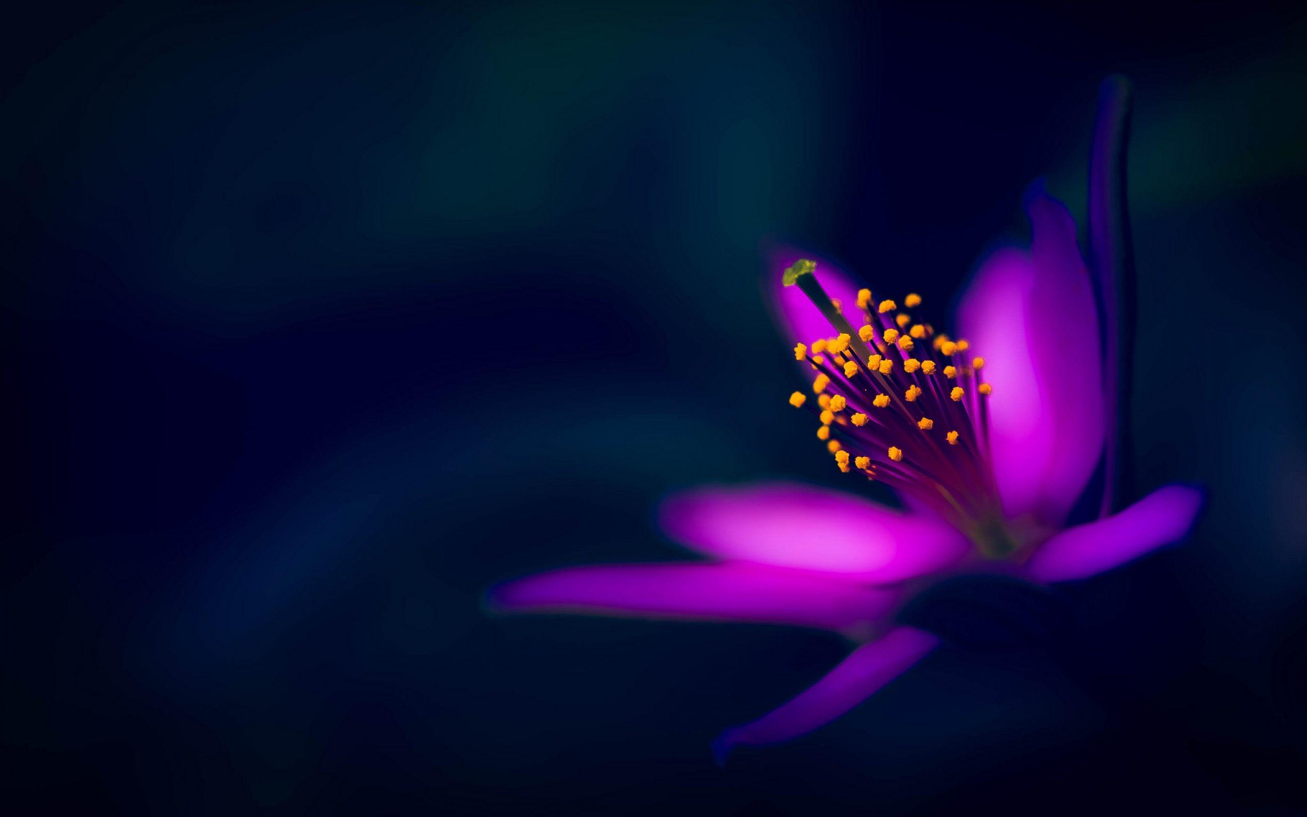 Dark Flower Background Posted By Samantha Cunningham