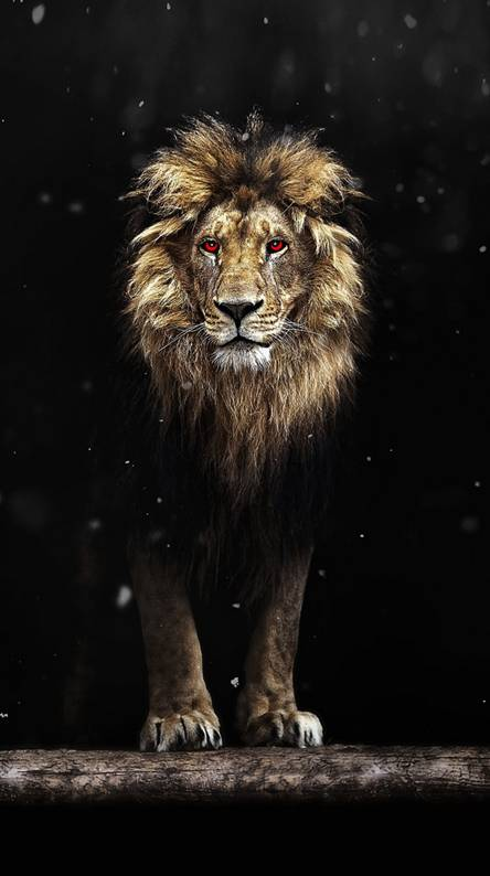 Dark Lion Wallpaper Posted By Michelle Walker