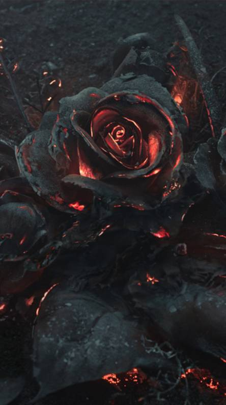 Dark Roses Wallpaper Posted By Christopher Simpson