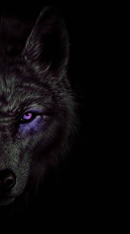Dark Wolf Wallpaper Hd Posted By Sarah Thompson