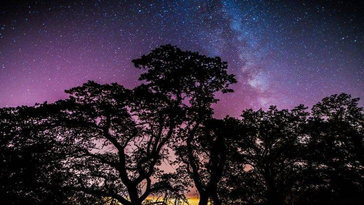 stars, Trees, Galaxy Wallpapers HD Desktop and Mobile