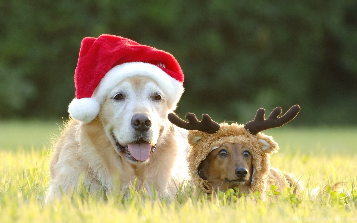 Christmas Wallpapers With Dogs Desktop Background