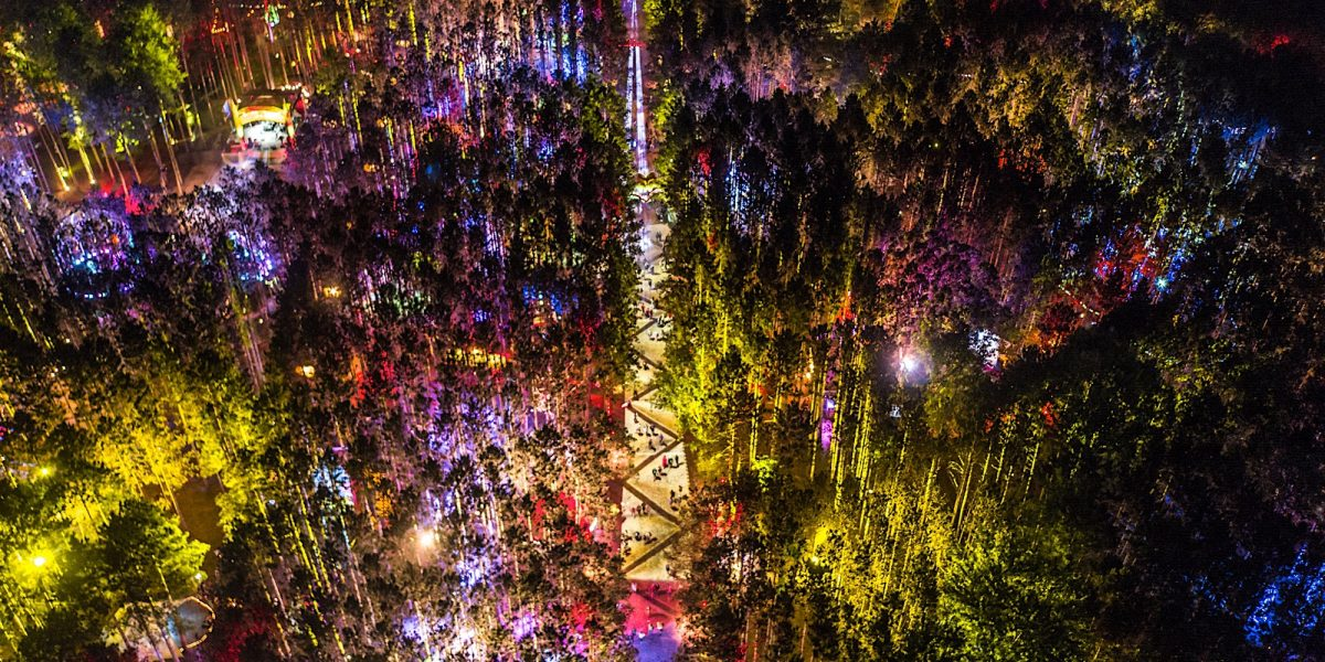 Electric Forest Wallpaper Posted By Ethan Thompson