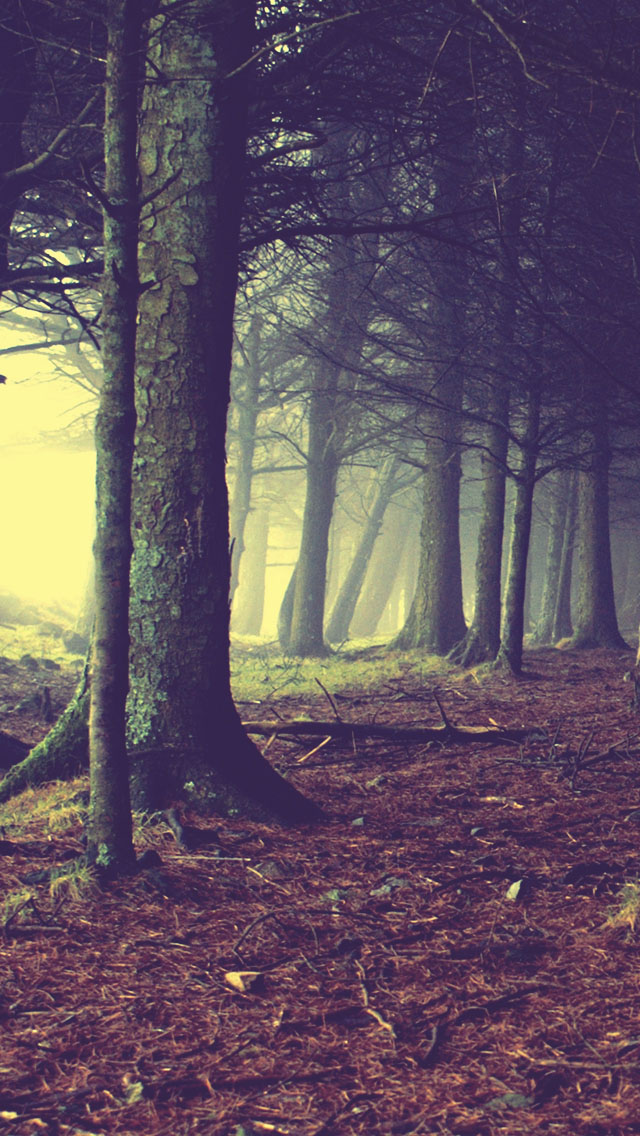 Enchanted Forest Backgrounds Posted By John Mercado
