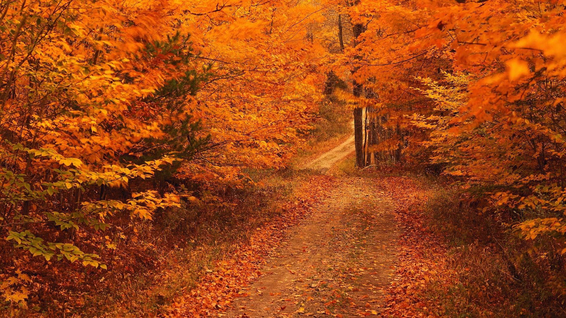 Autumn Wallpaper Hd For Desktop 1920x1080 Keysinspectorinc.com