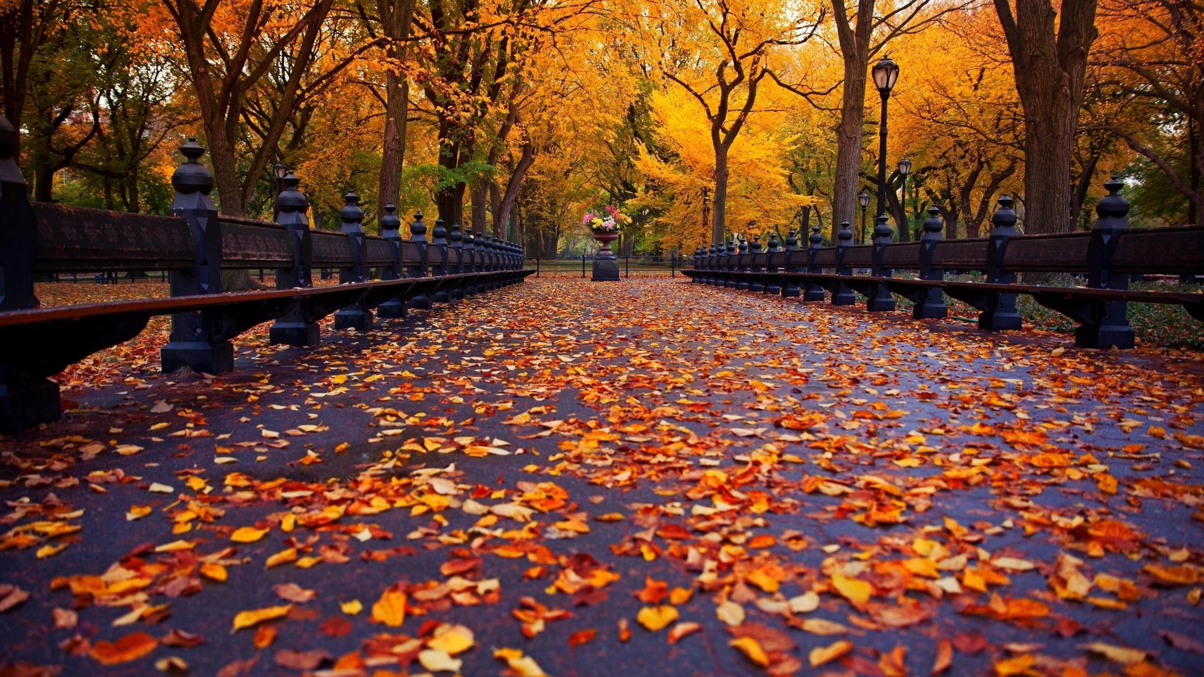 Fall Aesthetic Wallpapers Top Free Fall Aesthetic
