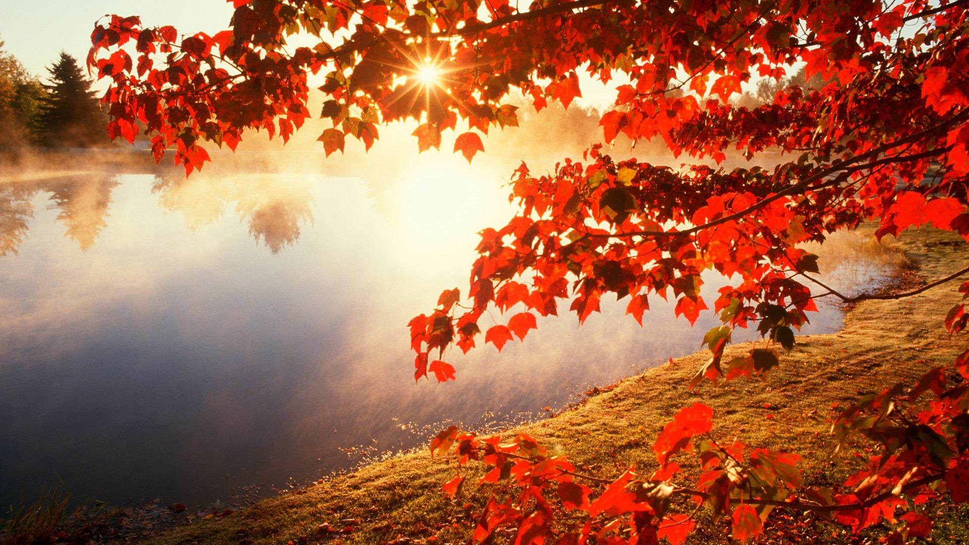 Fall Background Pictures 62 images