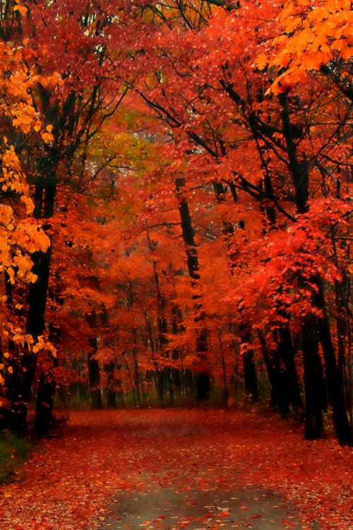 Fall Iphone Wallpaper Hd Posted By John Johnson